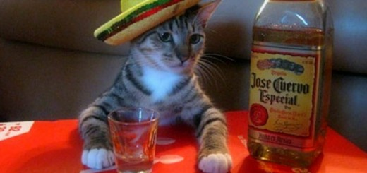 funny-Mexican-cat-drink-tequila