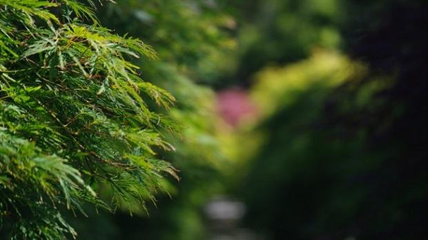 Advanced trees